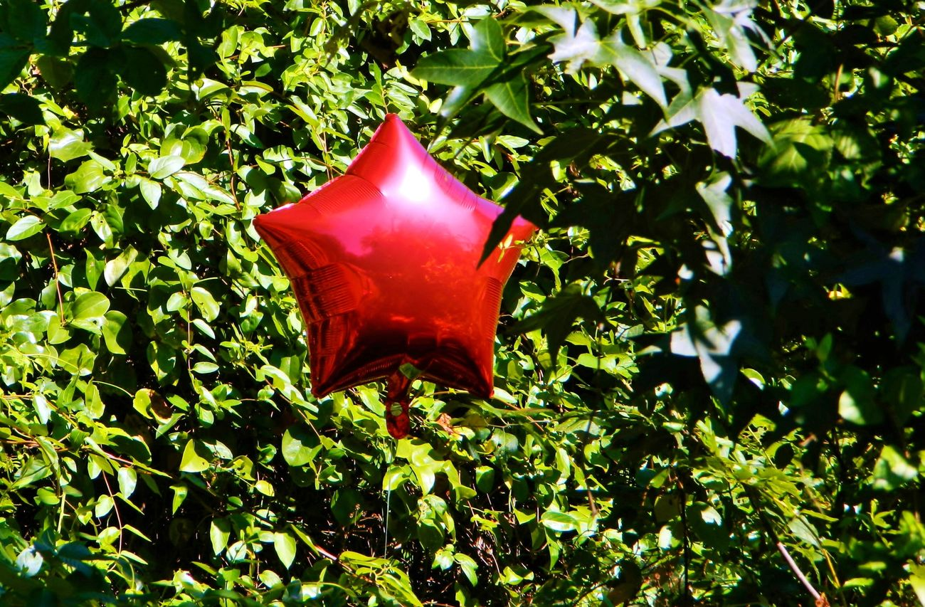 red balloon trapped in tree Bright Balloon Balloons Caught In The Moment Clear Sky Close Up Close-up Day Day Light Day Time Green Color In Tree Leaf Leaves Nature No People Outdoors Plant Red Shape Shinny Sky Star Trapped Tree