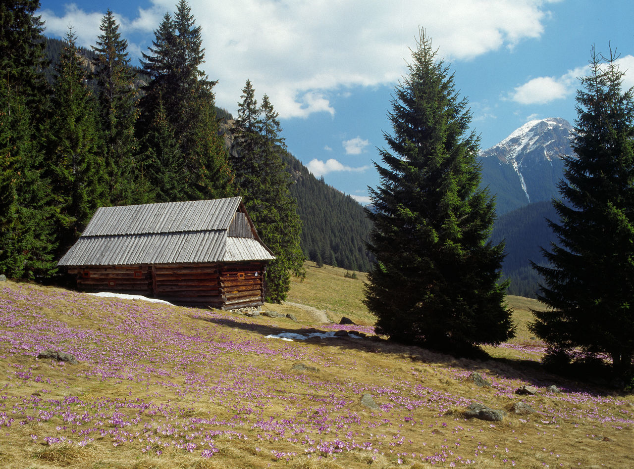 Beauty In Nature Blooming Crocus Day Flower Hut Landscape Mountain Mountains Nature Outdoors Poland Spring Spring In The Mountains Springtime Tatry Wooden House