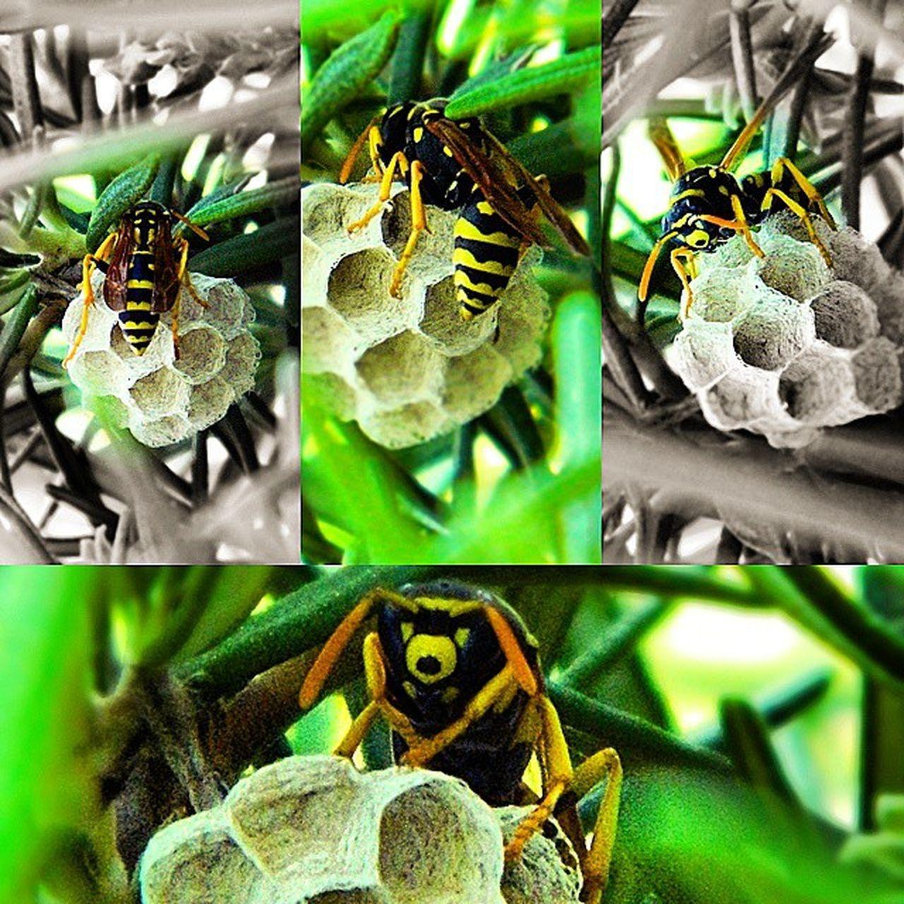 Nature Ape Piccoloinsettoalavoro Workinprogress nido geometricform picoftheday scoprirelanatura photography ❤📷