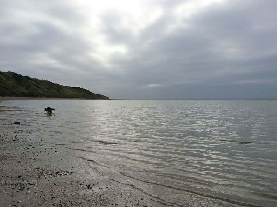 Thurstaston Beach Wirral River Dee  Thurstaston Beach Tranquil Scene Day Beauty In Nature No People Horizon Over Water Nature Tranquility Water Cloud - Sky Beach Outdoors Tree Cavalier King Charles Spaniel Swimming