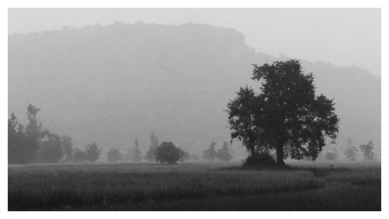 Smoke Screen Beauty In Nature Black And White Day Field Fog Grass Growth Landscape Mist Nature No People Outdoors Scenics Sky Tranquil Scene Tranquility Tree