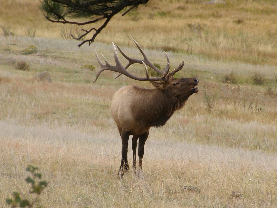 Beautiful stock photos of deer, Animal Call, Animal Themes, Animals In The Wild, Antler