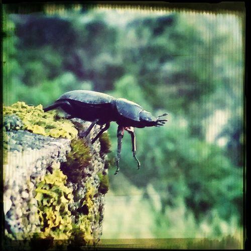 Bug Bug Life Beatle In My Garden EyeEm Animal Lover