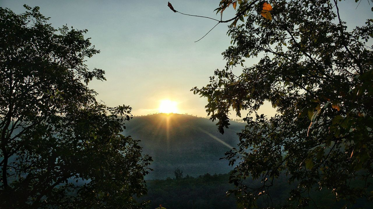 Beautiful Sunrise Sunnywintermornings The Colours Of Nature Contrasting Colors Sunrise From The Hill Sunrays Morning Sunrays Through The Branches Scenic Morning Treescape Landscapes The Golden Tears Of Sunlight On Leaves Colour Mood