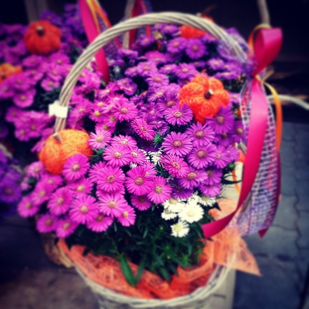 Blumen Herbst Lila Blumenkorb Herbstblumen