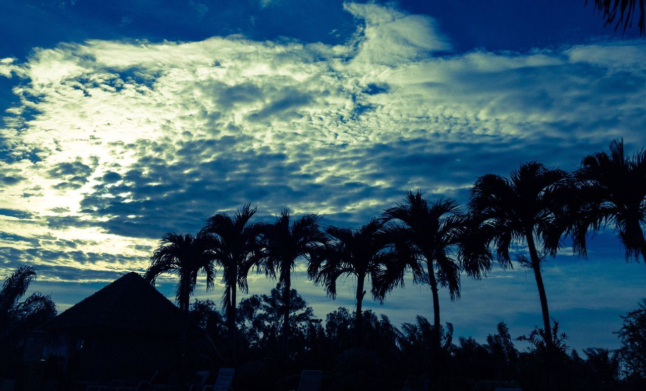 Sunset Sunset_collection Sunset Silhouettes Palm Tree Tree Sky Cloud - Sky Silhouette Nature No People Scenics Tropical Climate Beauty In Nature Outdoors Beach Day Palm Frond
