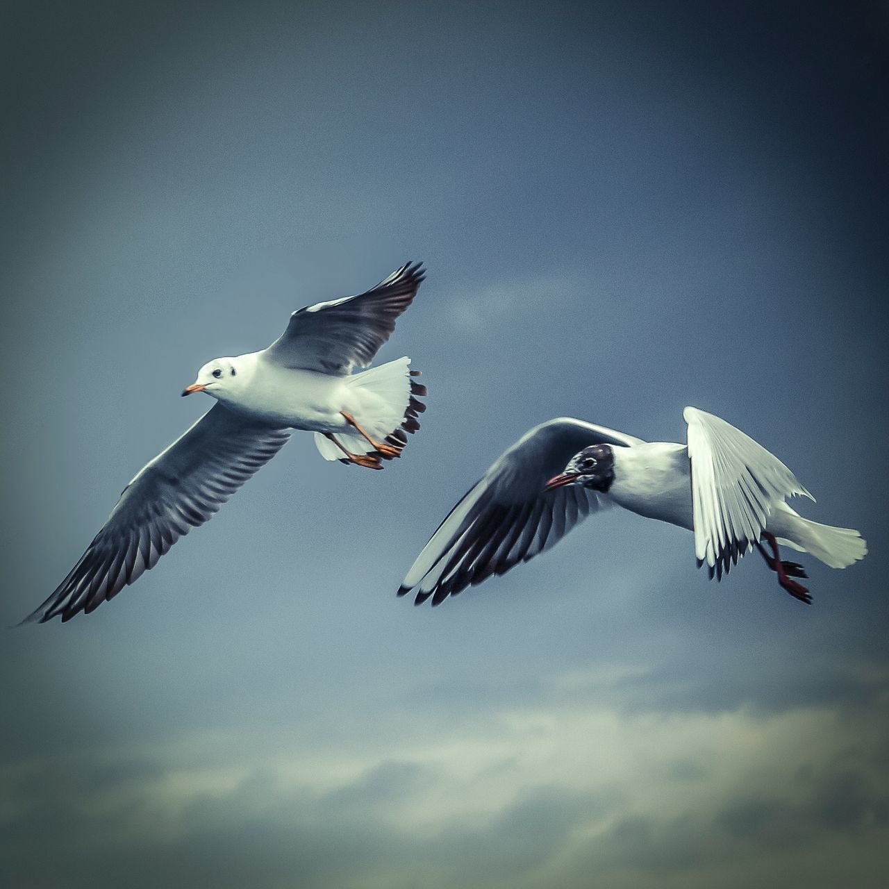 Bisgen Seagulls Enjoying Life Hello World Relaxing EyeEm Nature Lover Istanbul Eye4photography  Nature_collection EyeEm Masterclass