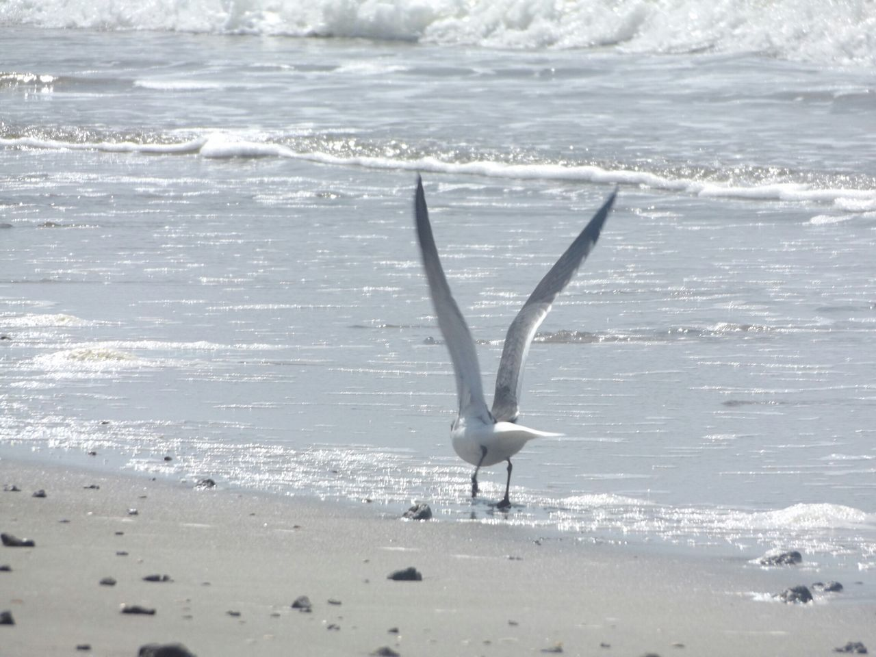 Oak Island NC Birds Ocean Oceanside