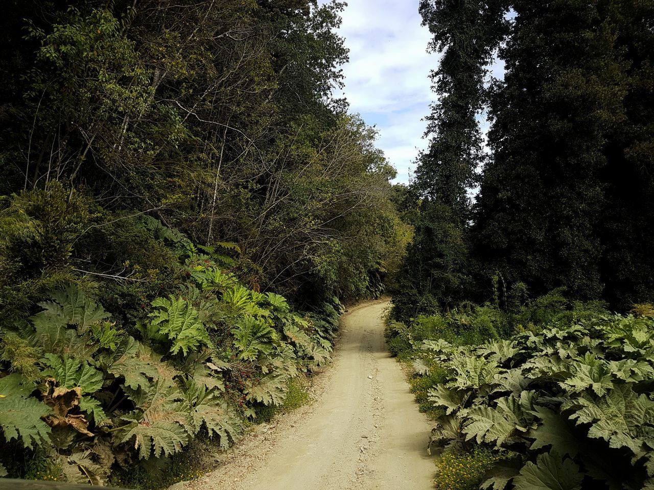 Tree Growth Nature Green Color Beauty In Nature Tranquility Sky No People Day Outdoors Scenics Low Angle View Road Freshness Nalca Earth Landscape Lifestyles Inspirations Exploring Beauty In Nature Light And Shadow Simplicity Traveling Offroad