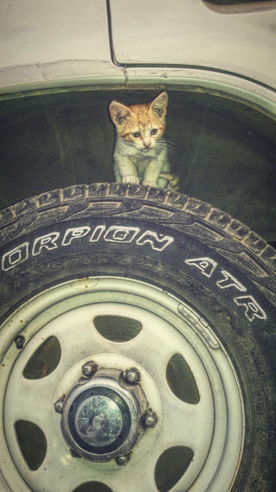 Gato Gatos Cats Cat Lovers Cats Of EyeEm Cat♡ GatosFelices Lindo Gatito Gatitolindo Gatitos