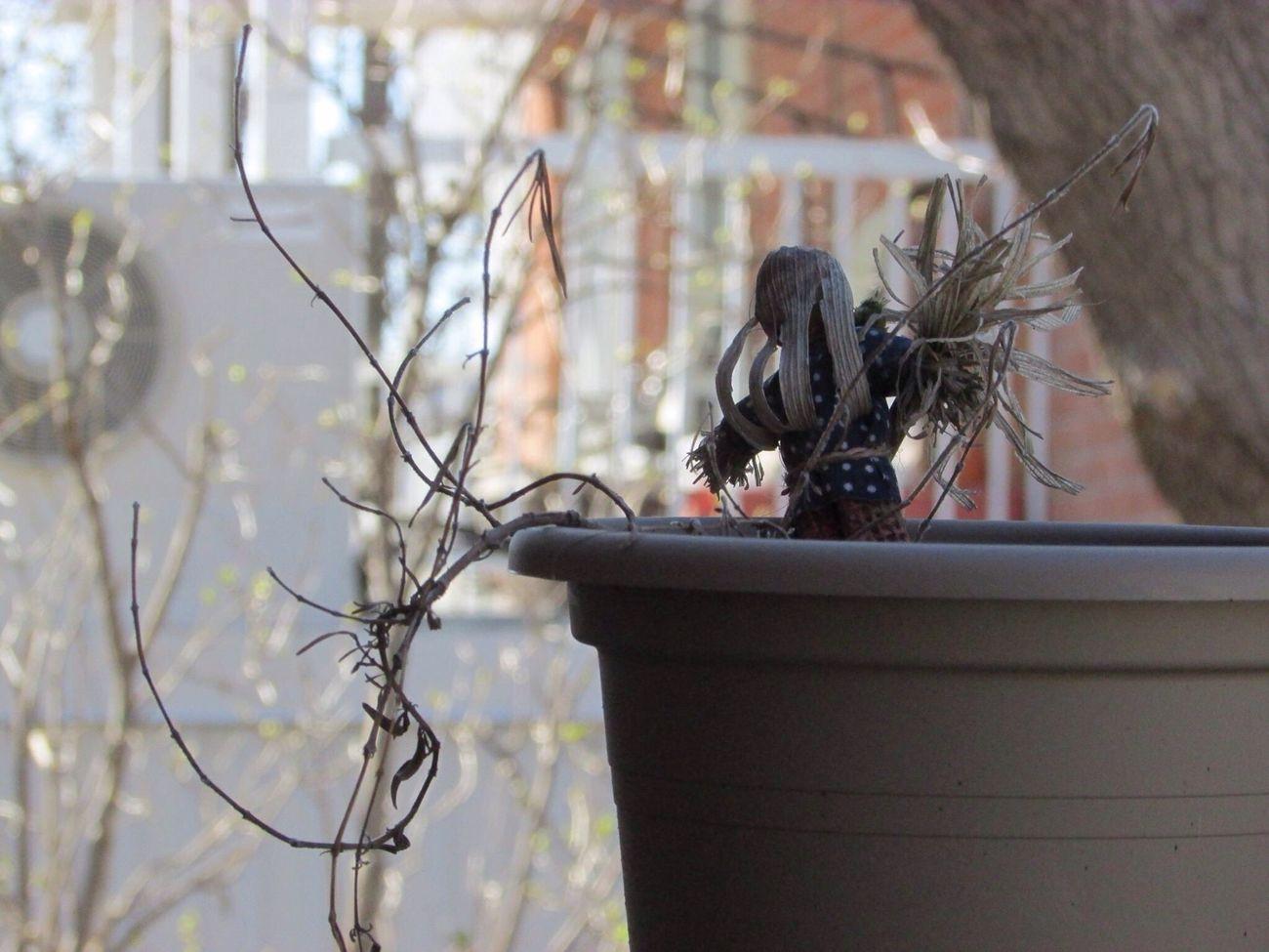 Die Plant Dead Dead Plant Pot Potted Plant épouvantail