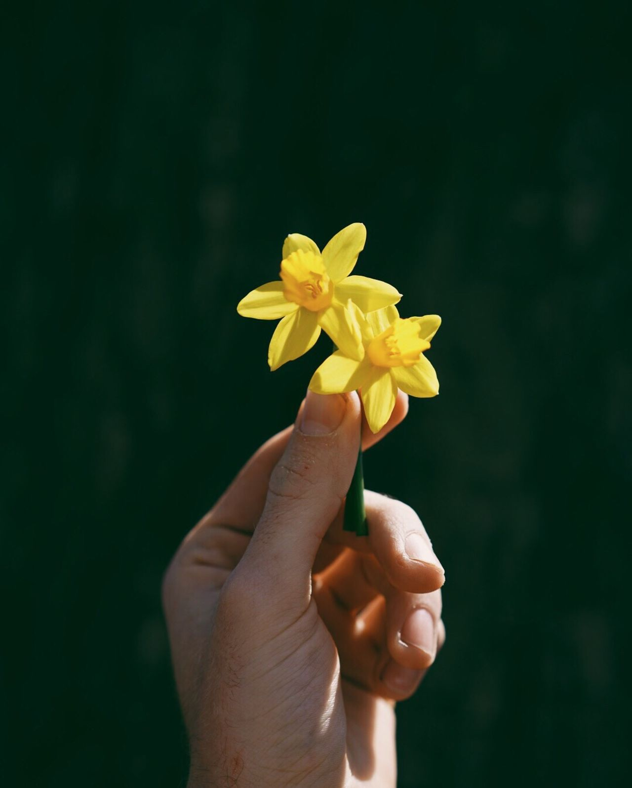Human Hand Human Body Part Flower One Person Close-up Human Finger Holding Flower Head Yellow Freshness Fragility People Nature Adults Only Day One Woman Only Adult Only Women Outdoors Spring April