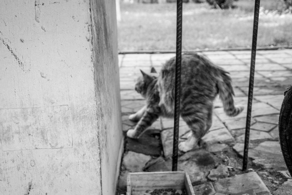 Animal Themes Mammal Outdoors Homeless Cats Cat Animal Black And White