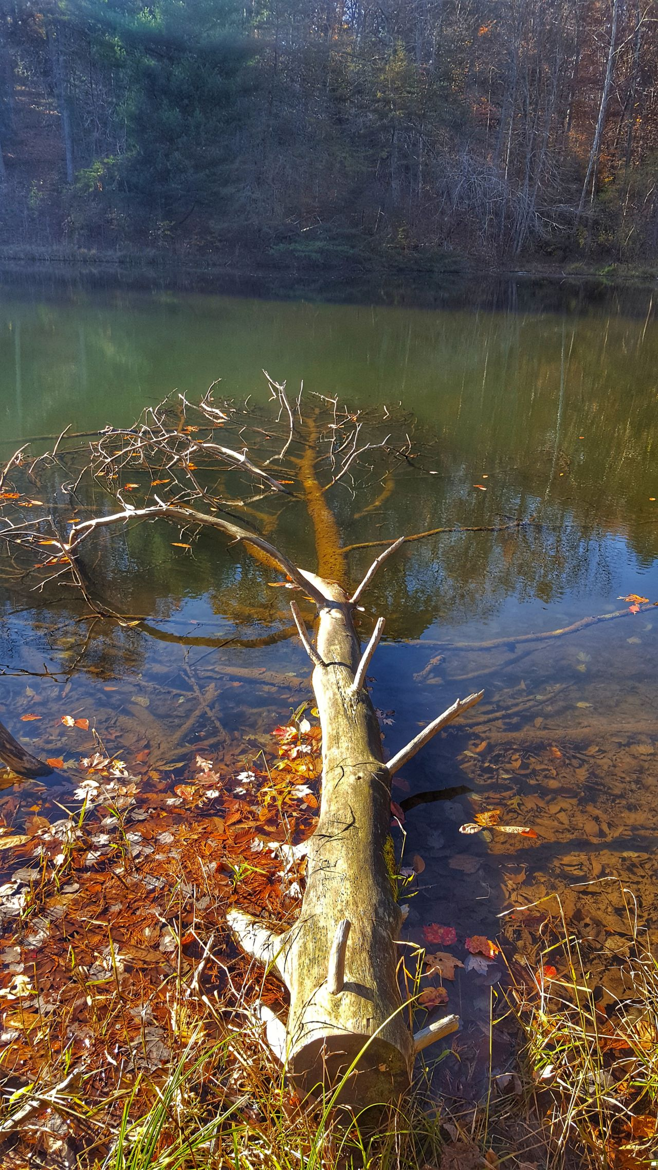 Fall Reflection Water Beauty In Nature No People Reflection Submerged Submerged Trees Winteriscoming Tranquility Nature Tree Beauty In Nature Prewinterclassic Winter Is Coming Winter 2016 Fallen Tree Fall Season Death And Life Lakelife Hocking Hills State Park Outdoors Nature Scenics