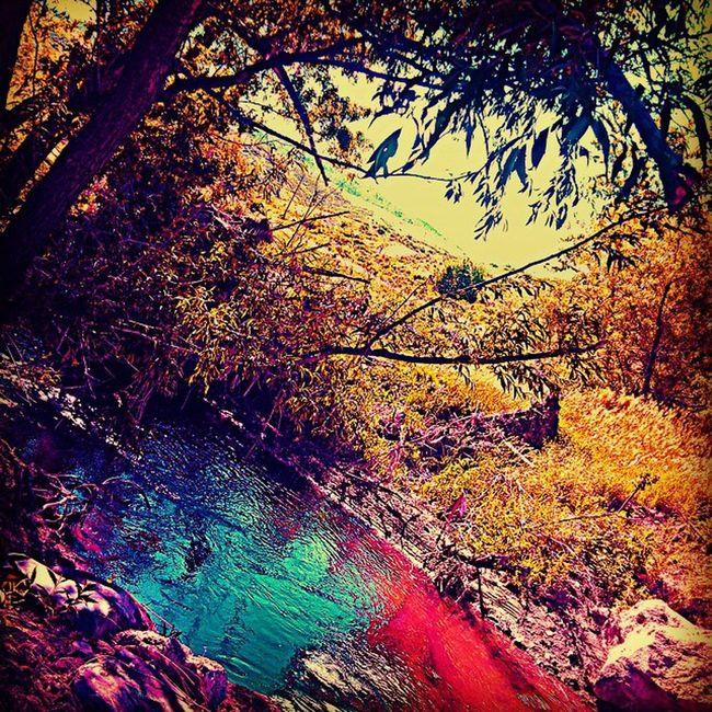 Colorado NoCo Landscape Nature Ignature PixlrExpress Reflection Trees River AwesomeDay @instagram @beaytifulnature @ibeautyofnature Freshair LIFESBETTERUPHERE