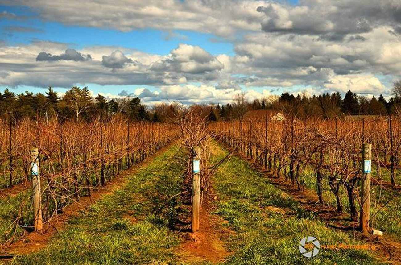 This view never gets dull. @outdoorphotomag @landscapephotomag @photographymagazine @niagaraparks @wineriesofniagara @reifestates Vines Reifestatewinery Clouds Blueskies Wine Spring Beautiful Outdoorphotography OutForADrive Winetastings Green Getoutside OutsideIsFree Naturallightphotographer Digitalphotography Southernontariophotographer Nikonphotographers Nikonphotography D7000 Prophotographer Rrhurstphotography Artsburlington Latowphotographersguild