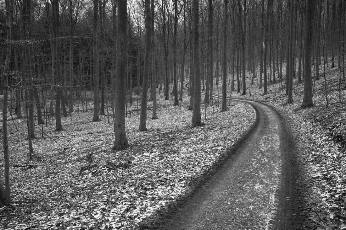 A road passing through the scene, edited in black and white to show the textures of the scene. Autumn Black And White Denmark Fall Forest Fyet Fyn Gritty Landscape Nature Road Scenics Svendborg