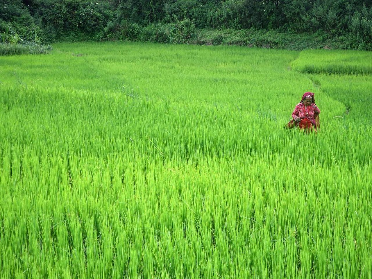 Green Color Field Grass Farm Growth Real People Nature Agriculture Outdoors One Person Day Nepal Nepali  Nepalipeople😊 Nepal Travel Nepali Way Bhaktapur Nepalese Nepali People Nepali Culture Travel Travel Destinations