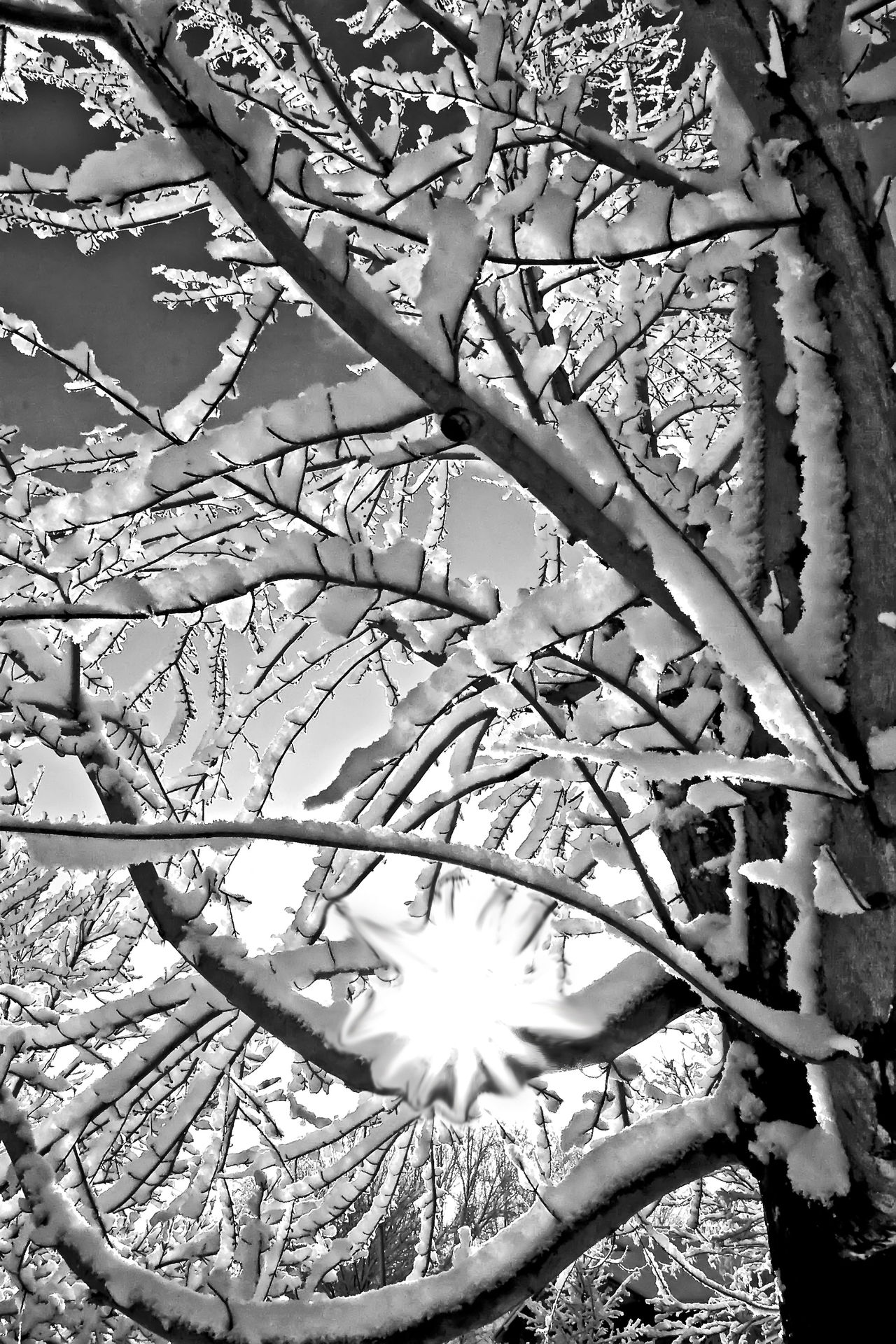 Fire And Ice Sun And Snow Tree The Great Outdoors - 2016 EyeEm Awards The Great Outdoors With Adobe Blackandwhite Photography Snow ❄ Snowfall Snow And Sun Snow And Tree Fine Art Photography