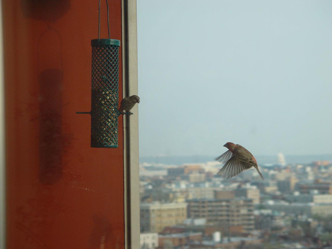 Birds Against Cityscape