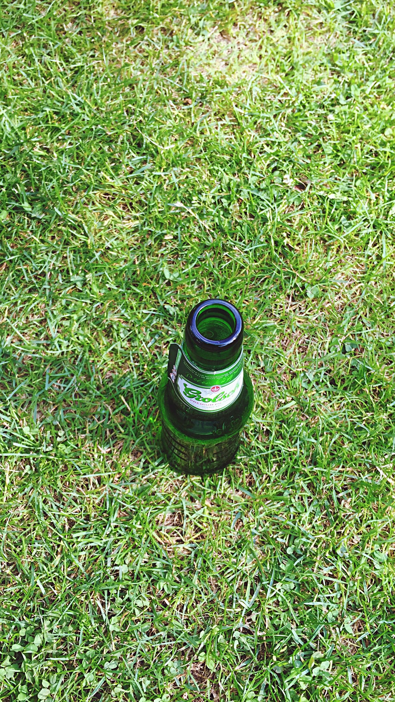 Nature On Your Doorstep EE Love Connection! Eye4photography  Maarn Taking Photos Grass Beer Party Camping Streetphotography another gr8 weekend, tempus fugit 😃
