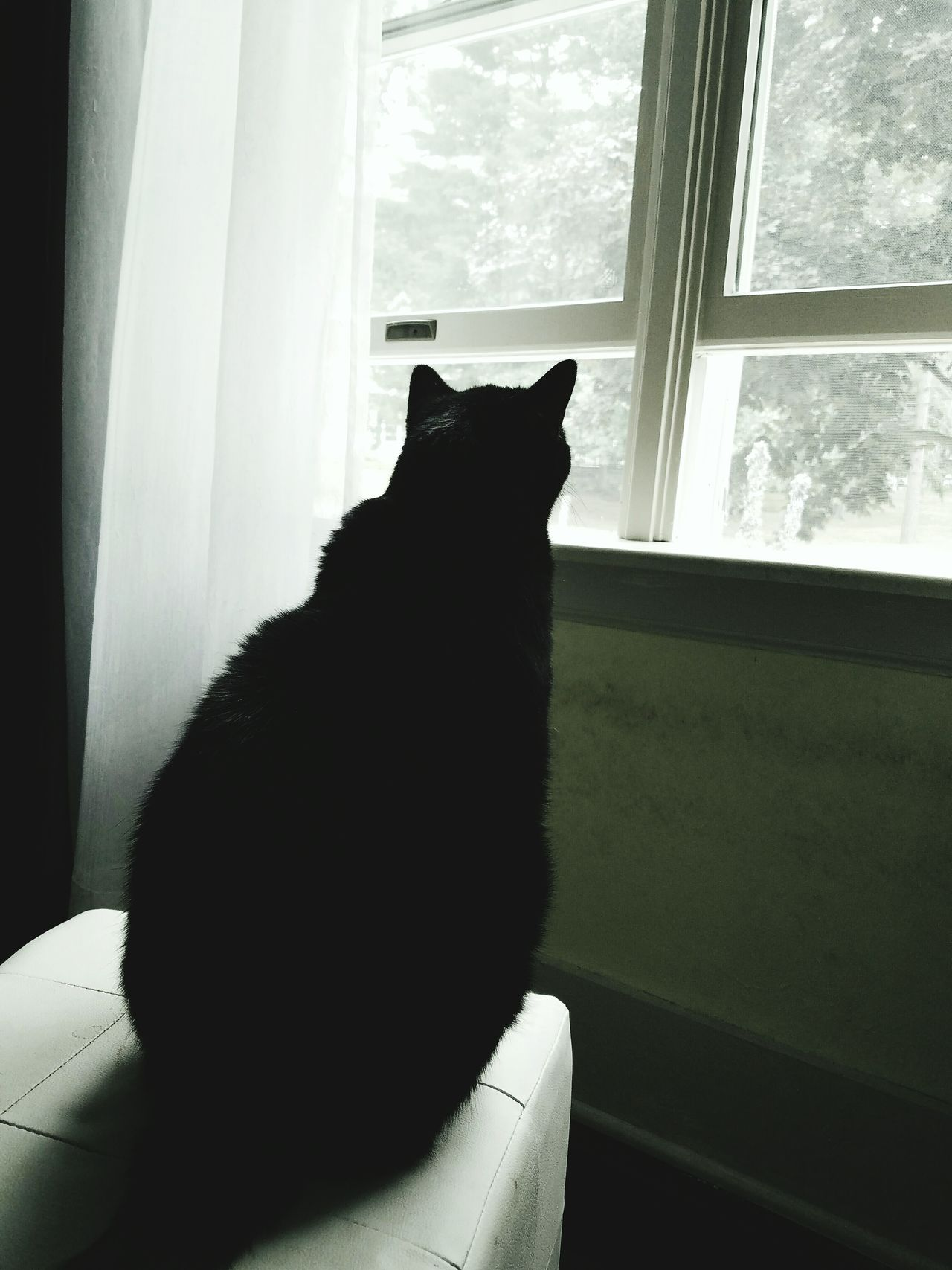 Cute Pets Pet Love Window Seat Kitty Looking Outside Sillouette Cat Black Cats Are Beautiful