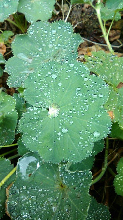 Raindrops Green Green Green!  Getting Inspired Summer ☀ EyeEm Nature Lover Growingthings Green Leaves