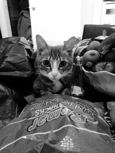 Kiara Snaksforcats Cat Mypet Home Timetoeat Queens NYC Blackandwhite
