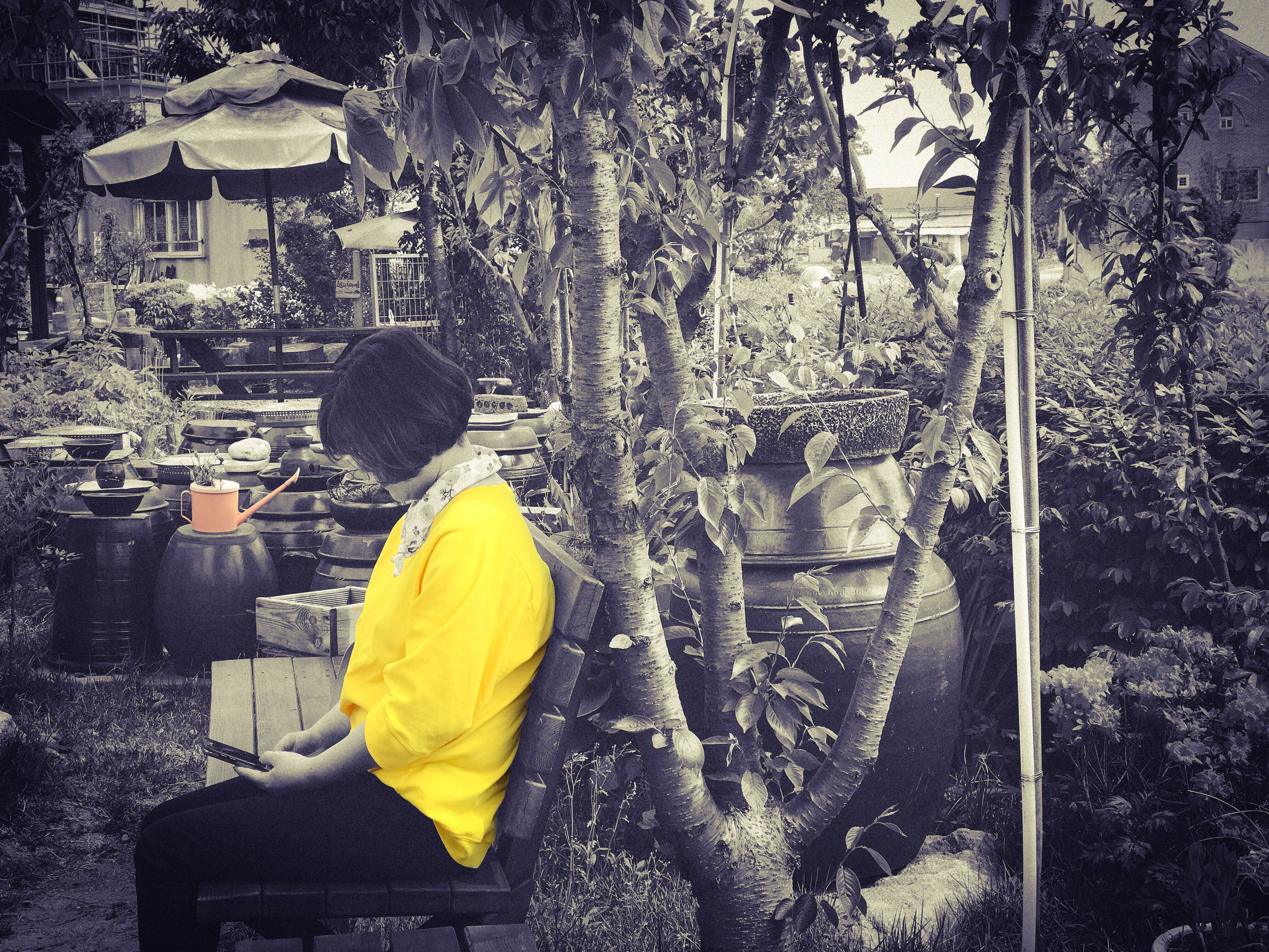 rear view, real people, tree, casual clothing, one person, yellow, sitting, lifestyles, outdoors, day, branch, architecture, men, nature, people
