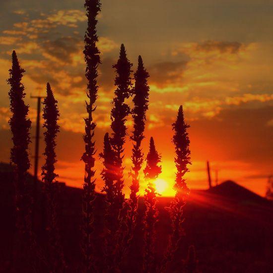 Sunset Beautiful XperiaZ1 Belong Anywhere