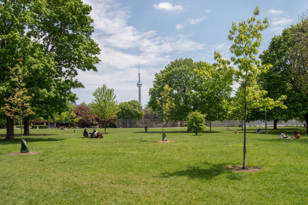 Park in Toronto with CN tower in the background CN Tower Green Park Toronto