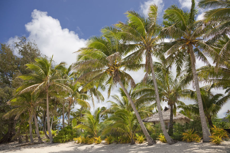 Tropical Beach with Palm Trees and palm-thatched Hut - Rarotonga, Cook Islands, Polynesia Beach Beach Hut Beach Photography Beachphotography Beautiful Nature Coconut Palm Tree Coconut Trees Cook Islands Cottage Hut Nature No People Palm Tree Palm Tree Palm Trees Polynesia Rarotonga Thatched Roof The Secret Spaces Tourist Resort Travel Destinations Tropical Tropical Climate Tropical Paradise Vacations