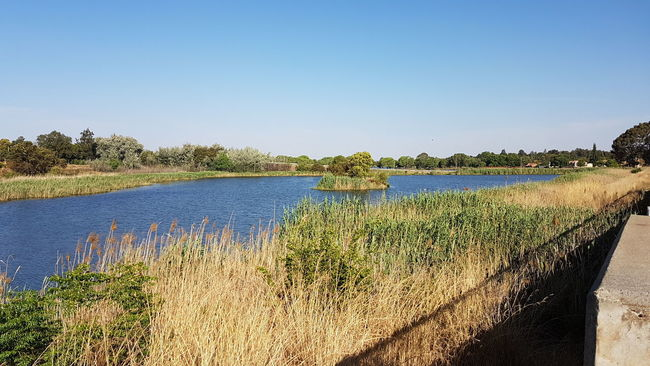 Water Clear Sky Copy Space Tranquil Scene Scenics Blue Tranquility Plant Growth Lake Travel Destinations Tourism Beauty In Nature Nature Non-urban Scene Day Vacations Flower Swamp Outdoors Wetlands Birdlife🕊 Birdlife South Africa South Africa 🇿🇦