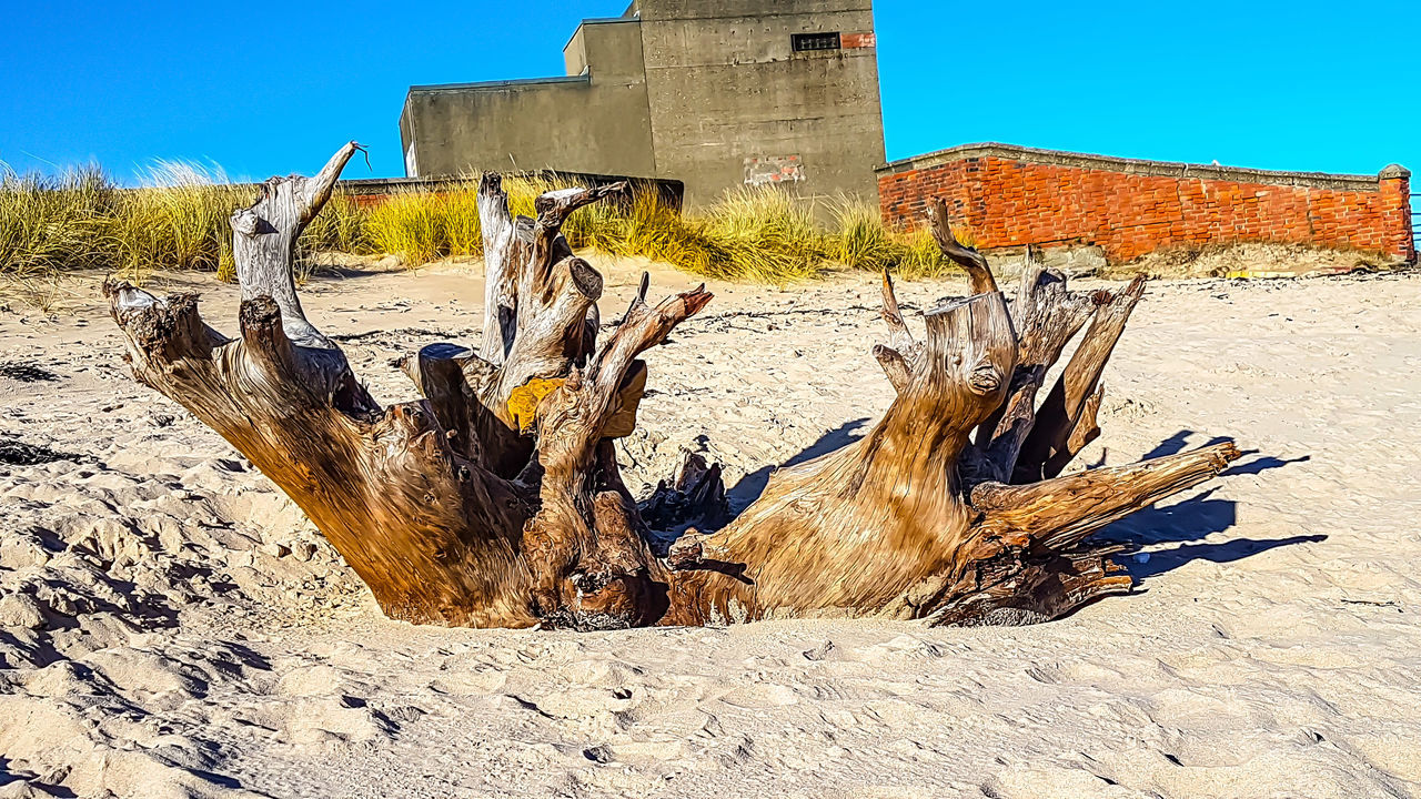Take a stroll with me and we'll see what we can see. Clear Sky Outdoors Phone Photography Samsung Galaxy S7 Edge Drift Wood On Beach For The Love Of Photography