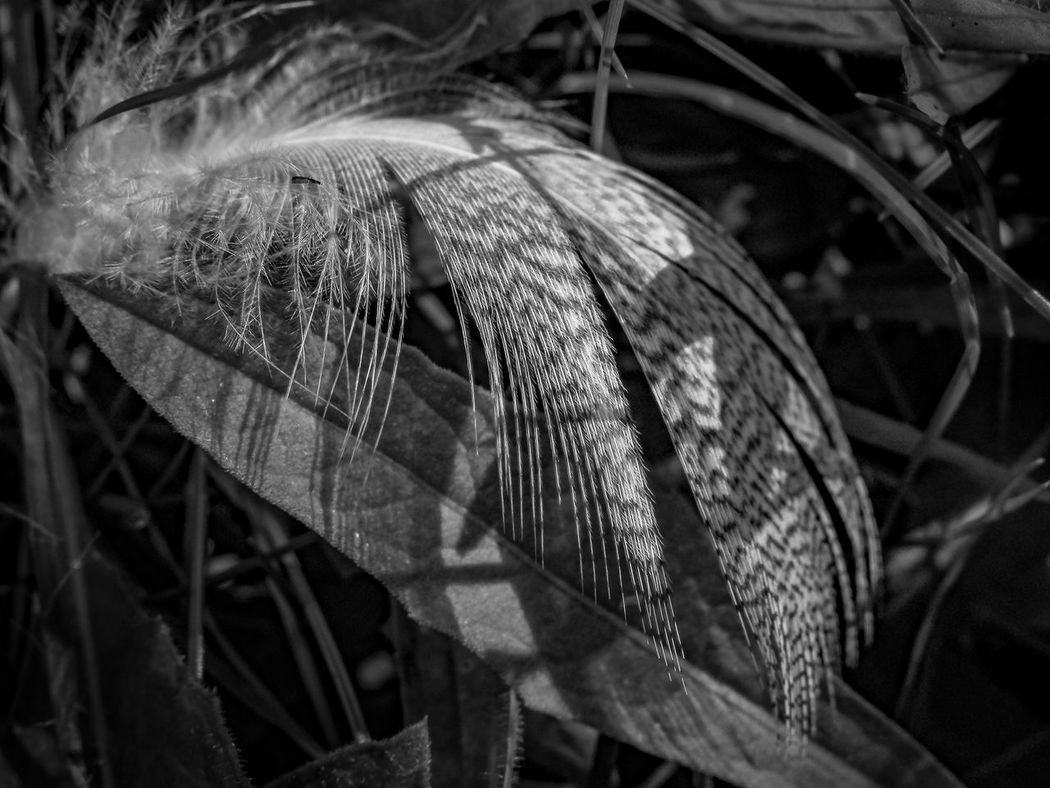 Feather  Close-up Black And White Nature Non-urban Scene Fine Art Macro Abstract Eye4photography  EyeEm Best Shots Still Life Olympus Perspective Photography Fine Art Photography The Week On EyeEm