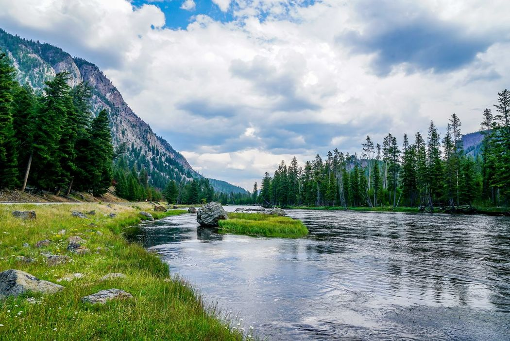 The Firehole river that runs through Yellowstone National Park in Montana. Montana Beauty In Nature Cloud - Sky Day Forest Grass Landscape Mountain Nature No People Outdoors River Scenics Sky Summer Sunshine Tranquil Scene Tranquility Travel Destinations Tree Water