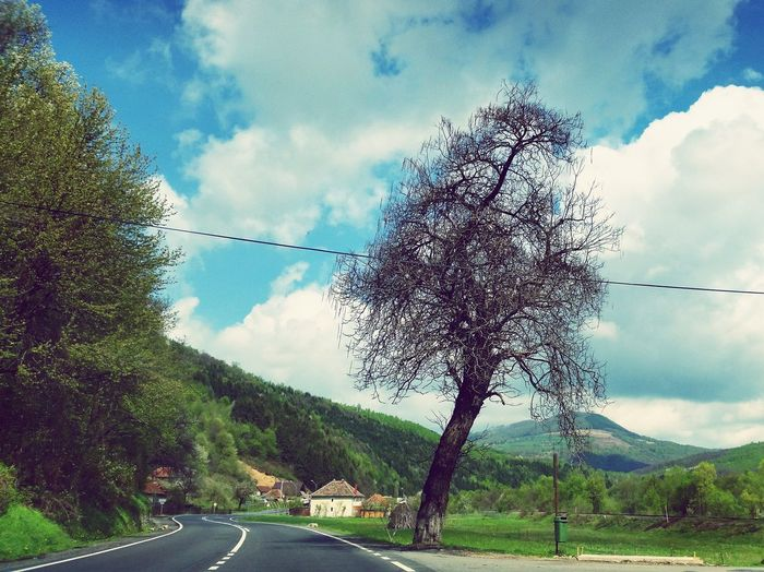 Old tree , older stories First Eyeem Photo