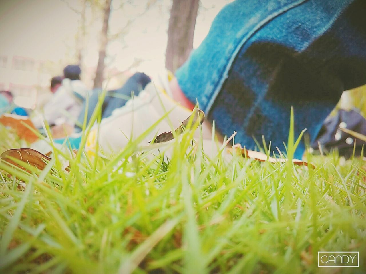 grass, field, selective focus, real people, nature, growth, day, outdoors, beauty in nature, close-up, one person, people