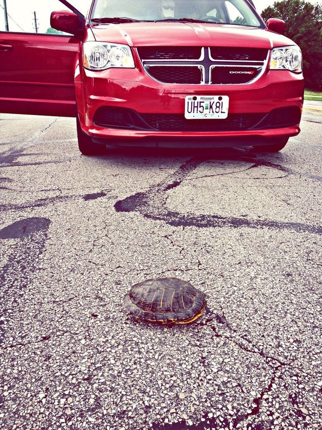 Saved a turtle on the road!