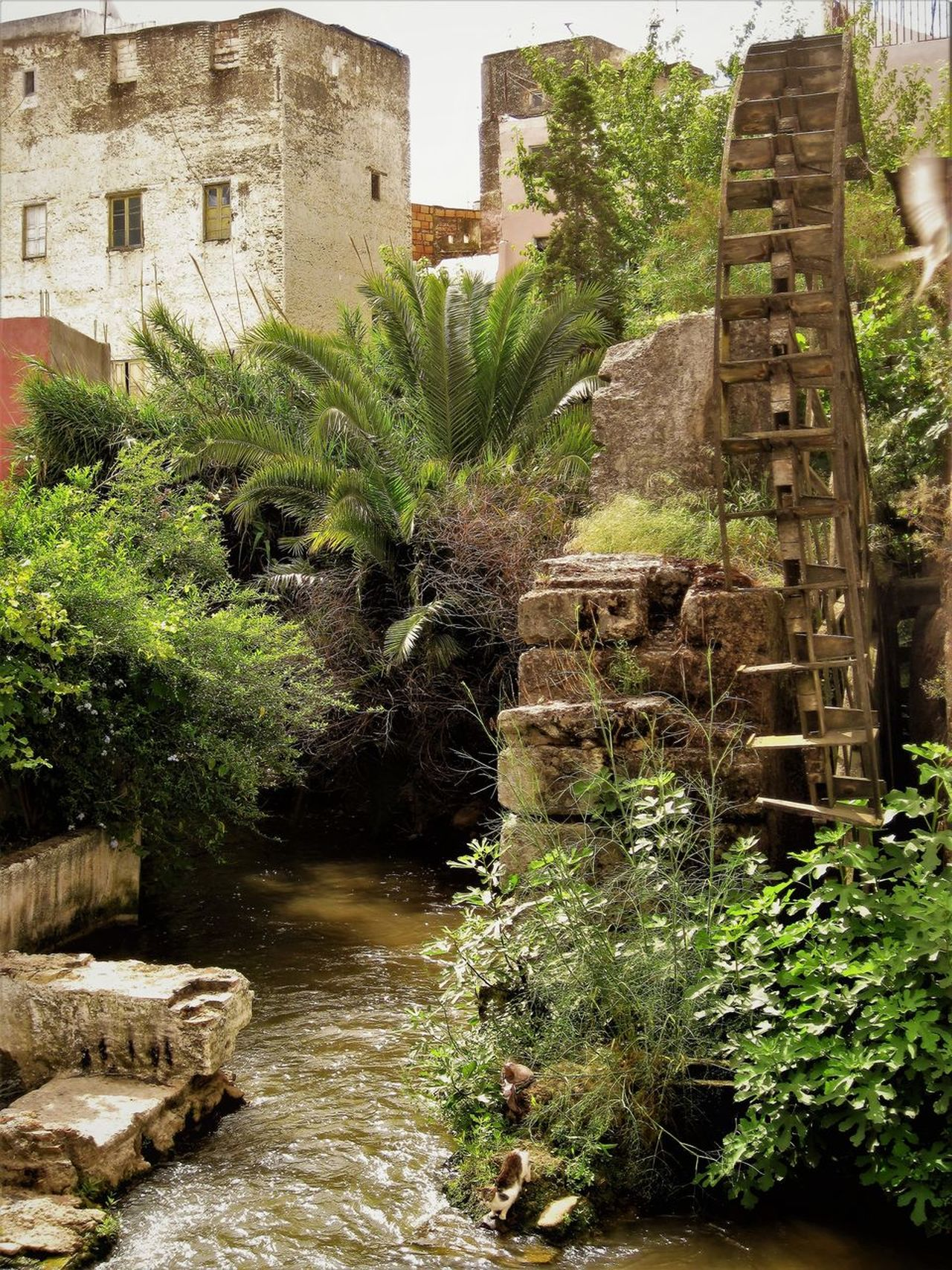 Ancient Architecture Building Exterior Built Structure Day History Nature No People Outdoors Tree Water Wheel Watermill