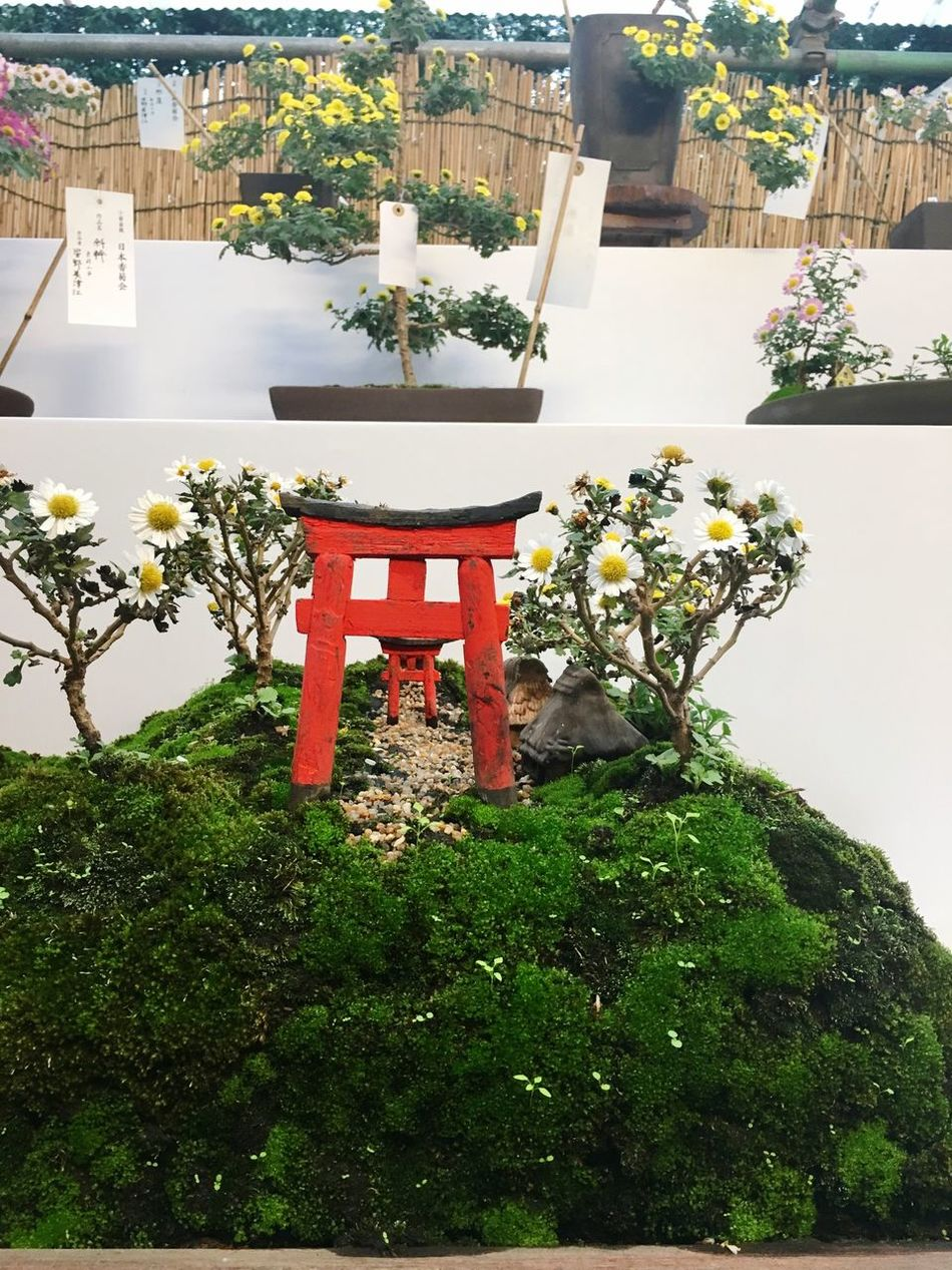Flovers IKEBANA Meiji Shrine JapanLife Tokyo Flower Architecture Building Exterior Growth Plant Built Structure Tree Outdoors No People Nature Day Sky きく Emperoflower