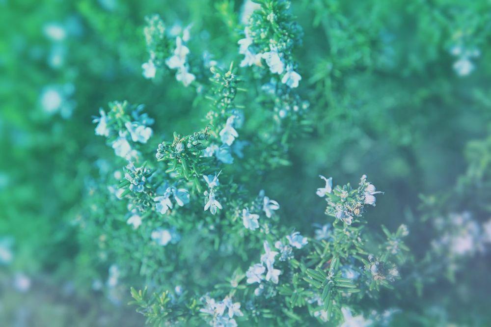 Blue Flowers Blue Flowers Green Leaves Spring Springtime Day Outdoors Small Flowers Small Flower No People