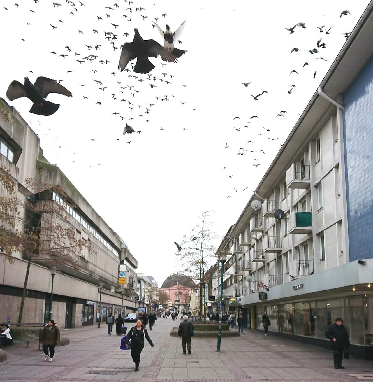 When pidgeons fly ... City Bird Large Group Of Animals Outdoors Flock Of Birds People Day Cityphotography Darmstadt