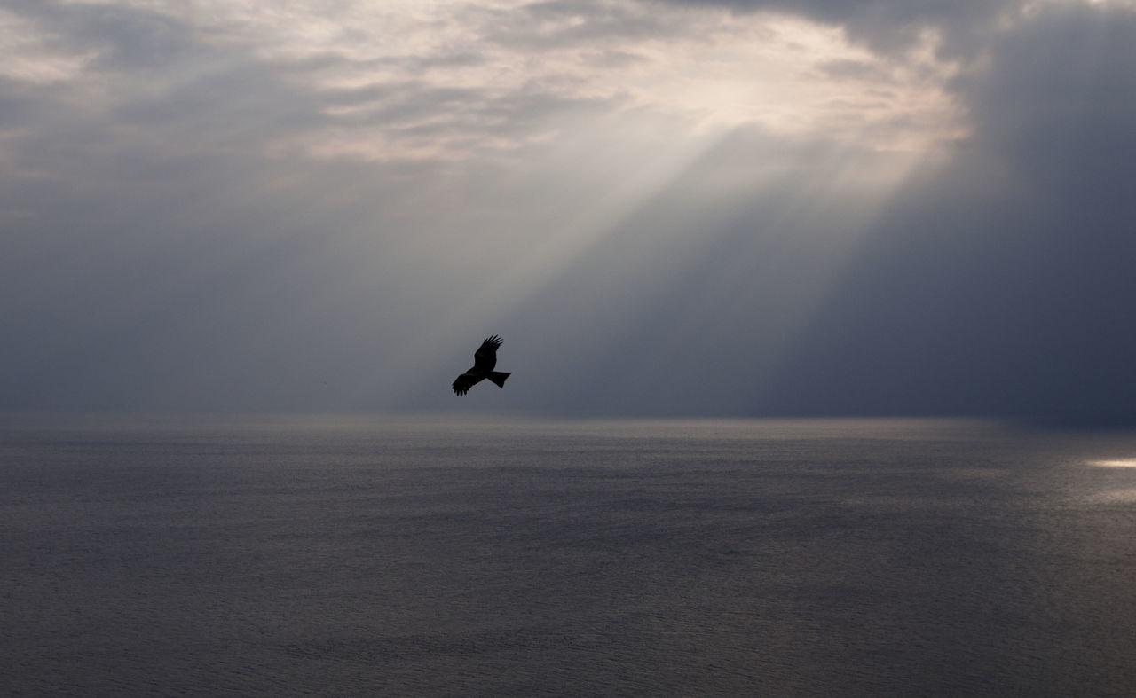 Beautiful stock photos of birds, Animal Themes, Beauty In Nature, Bird, Cloud