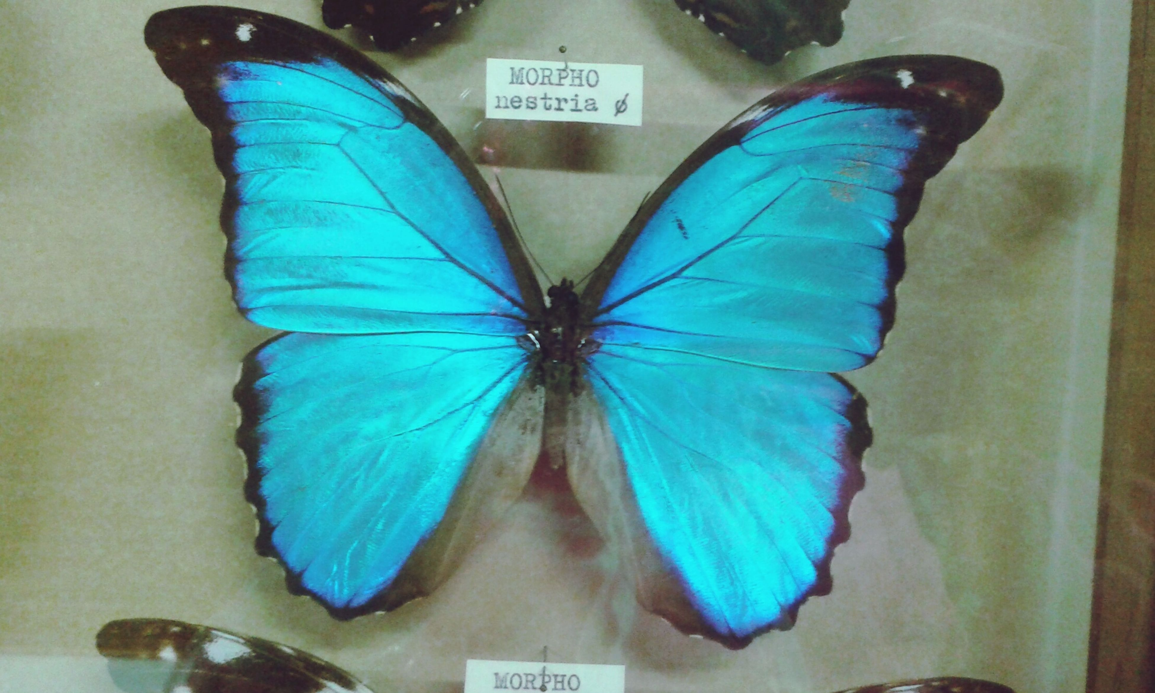 blue, purple, one animal, close-up, animal themes, multi colored, peacock, art and craft, no people, high angle view, art, outdoors, day, wood - material, creativity, butterfly, focus on foreground, animals in the wild, butterfly - insect