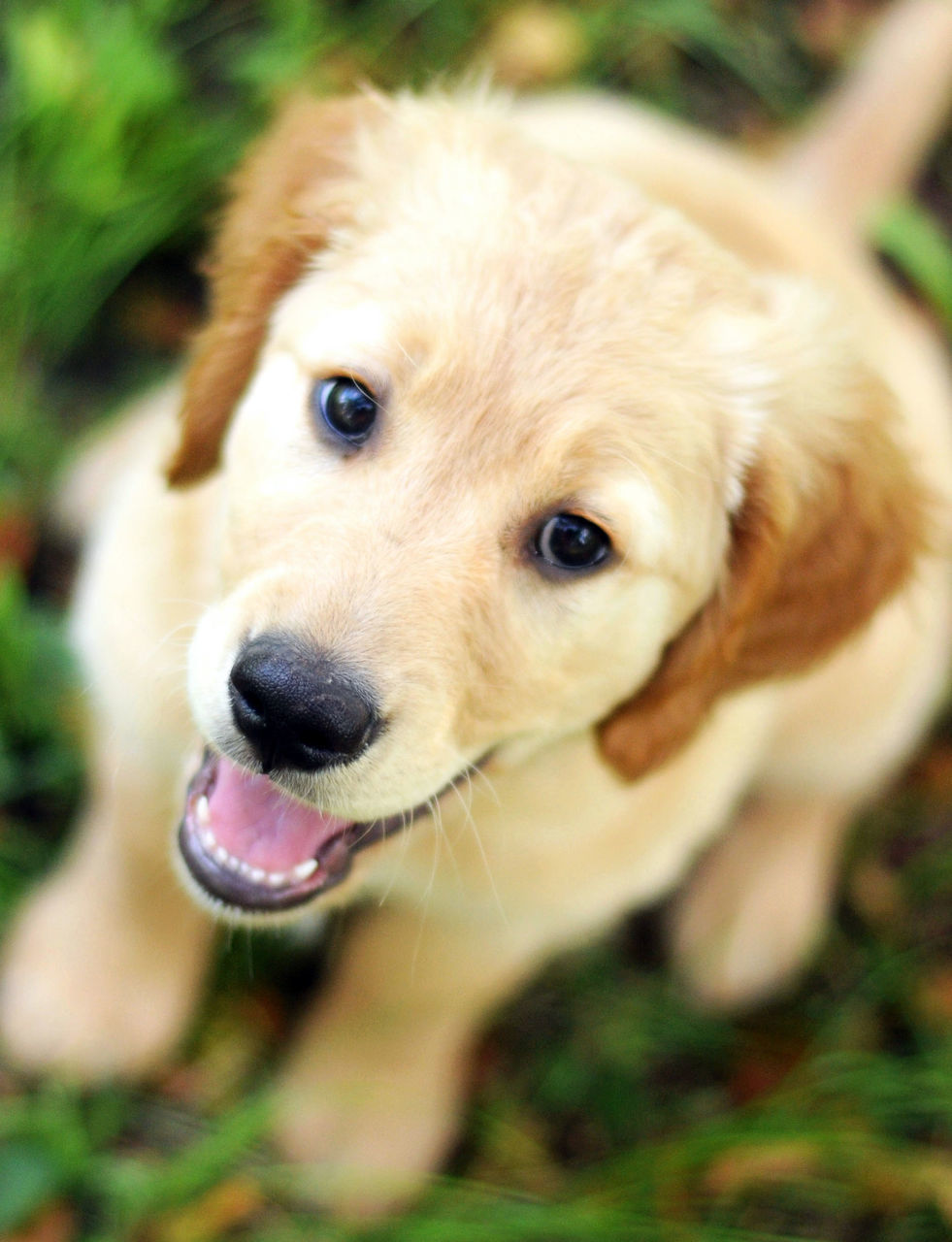dog, pets, one animal, domestic animals, mammal, animal themes, close-up, mouth open, looking at camera, focus on foreground, portrait, sticking out tongue, no people, day, outdoors