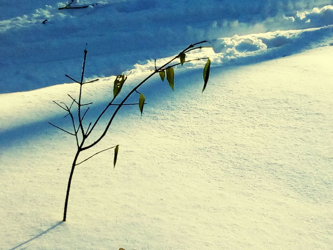 Sand Nature Outdoors Snow No People Day Beach Cold Temperature Beauty In Nature Sky Tree Weather Scenics Forest Bare Tree Close-up EyeEm Nature Lover The Great Outdoors - 2016 EyeEm Awards Shadow Landscape Tranquility Beauty In Nature Frozen Nature_collection Tree Trunk