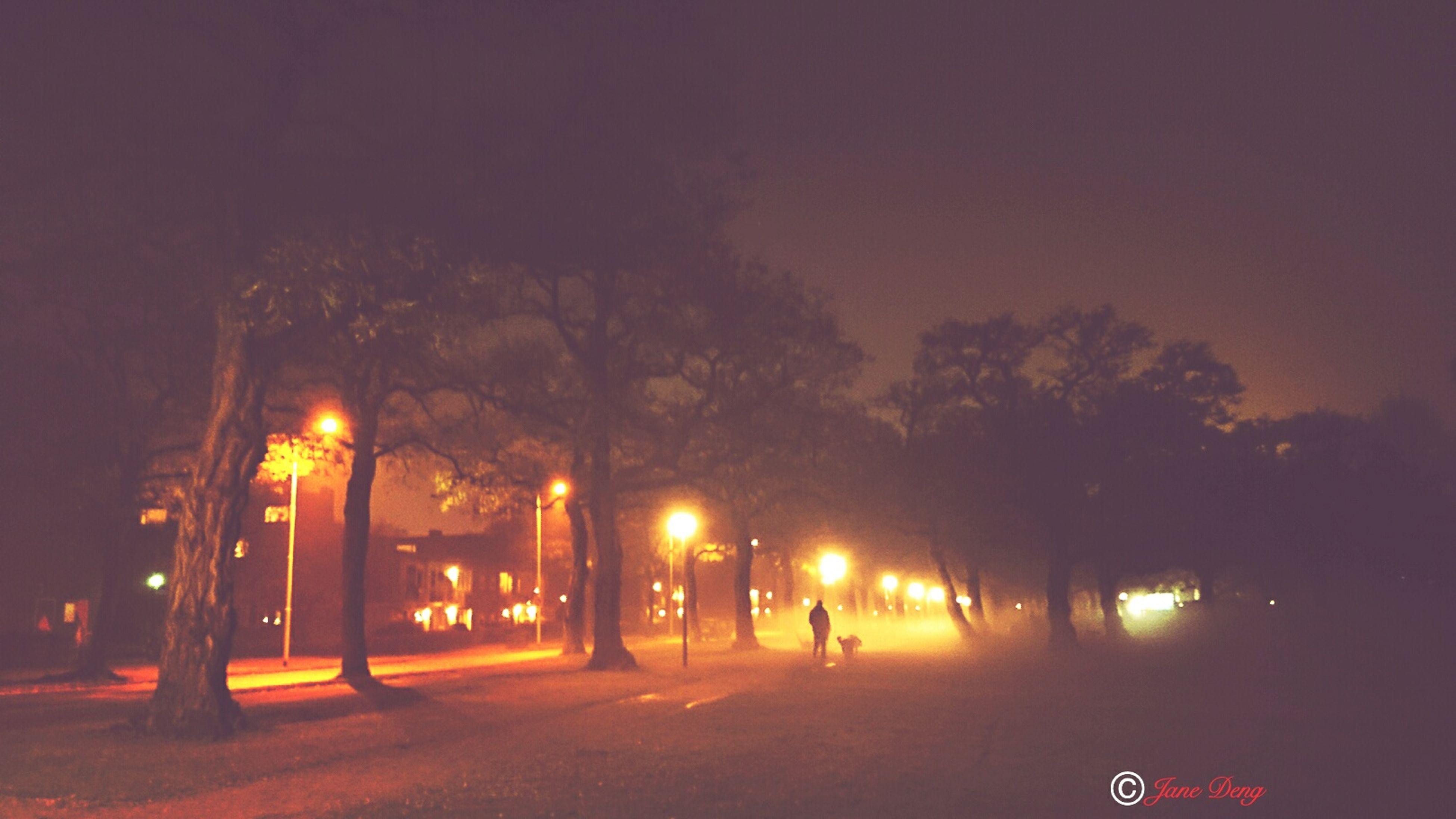 tree, street light, illuminated, night, outdoors, no people, sky, nature, sunset, beauty in nature