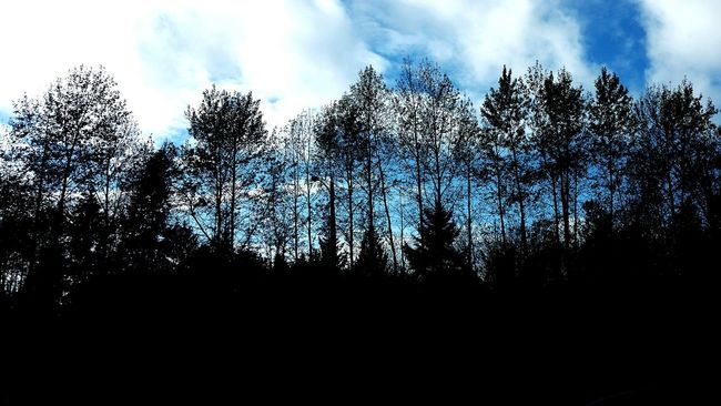 Autumn trees. Silhouette Beauty In Nature Sky Cloud - Sky Nature Country Sky Dark Trees