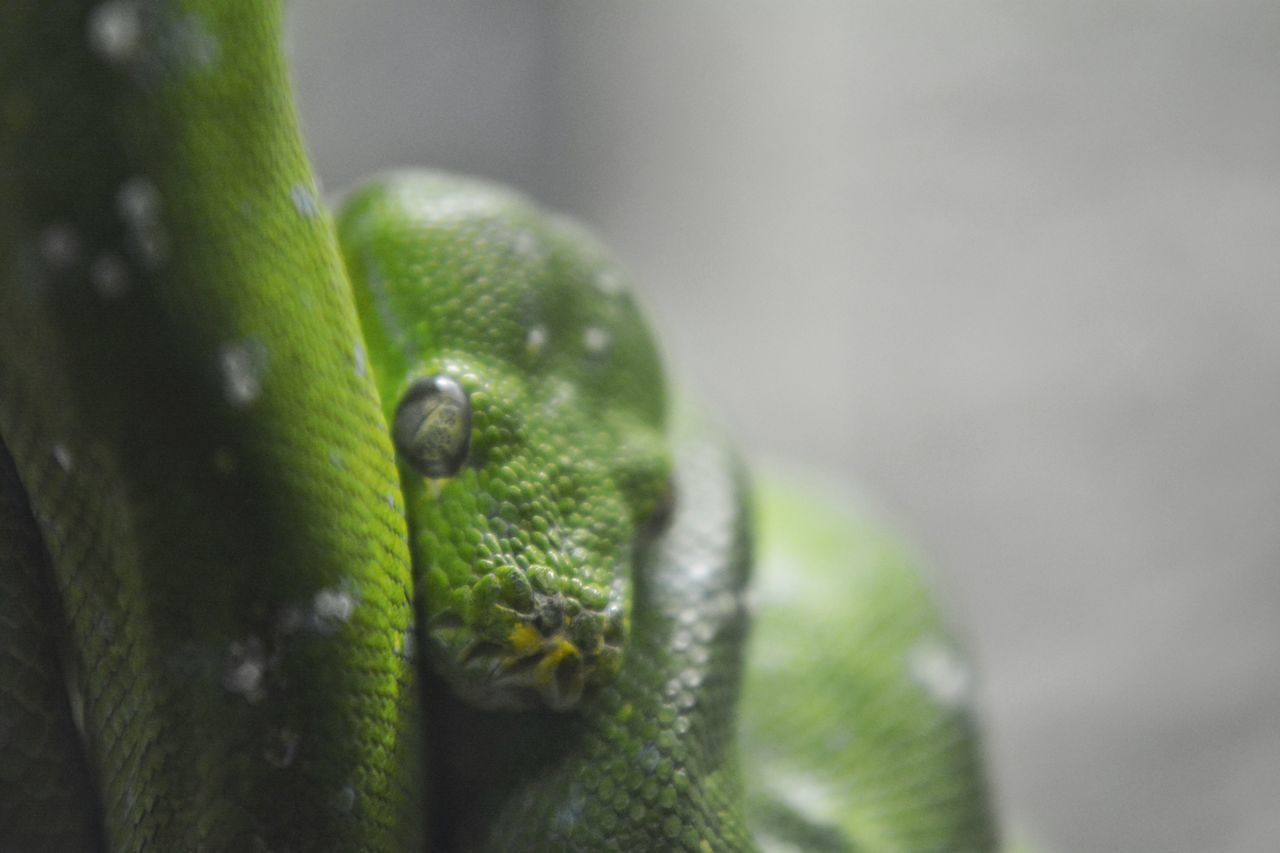 Snakeface Snake Little Rock Zoo Little Rock, Arkansas Time With My Daughter Upclose And Personal Color Photography